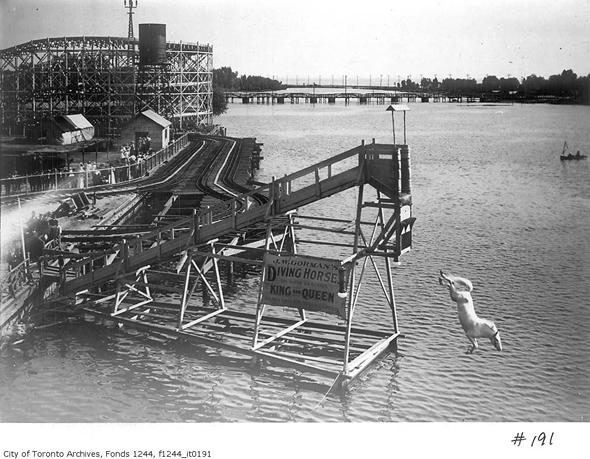 Hanlan's Point Diving Horse