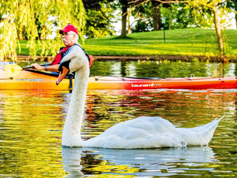 White Swan and kayak